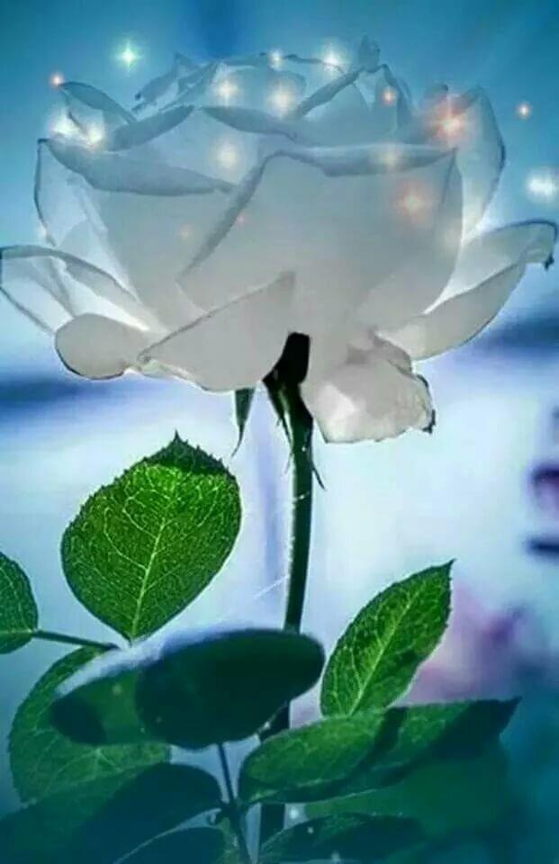 Гиф открытки белые розы