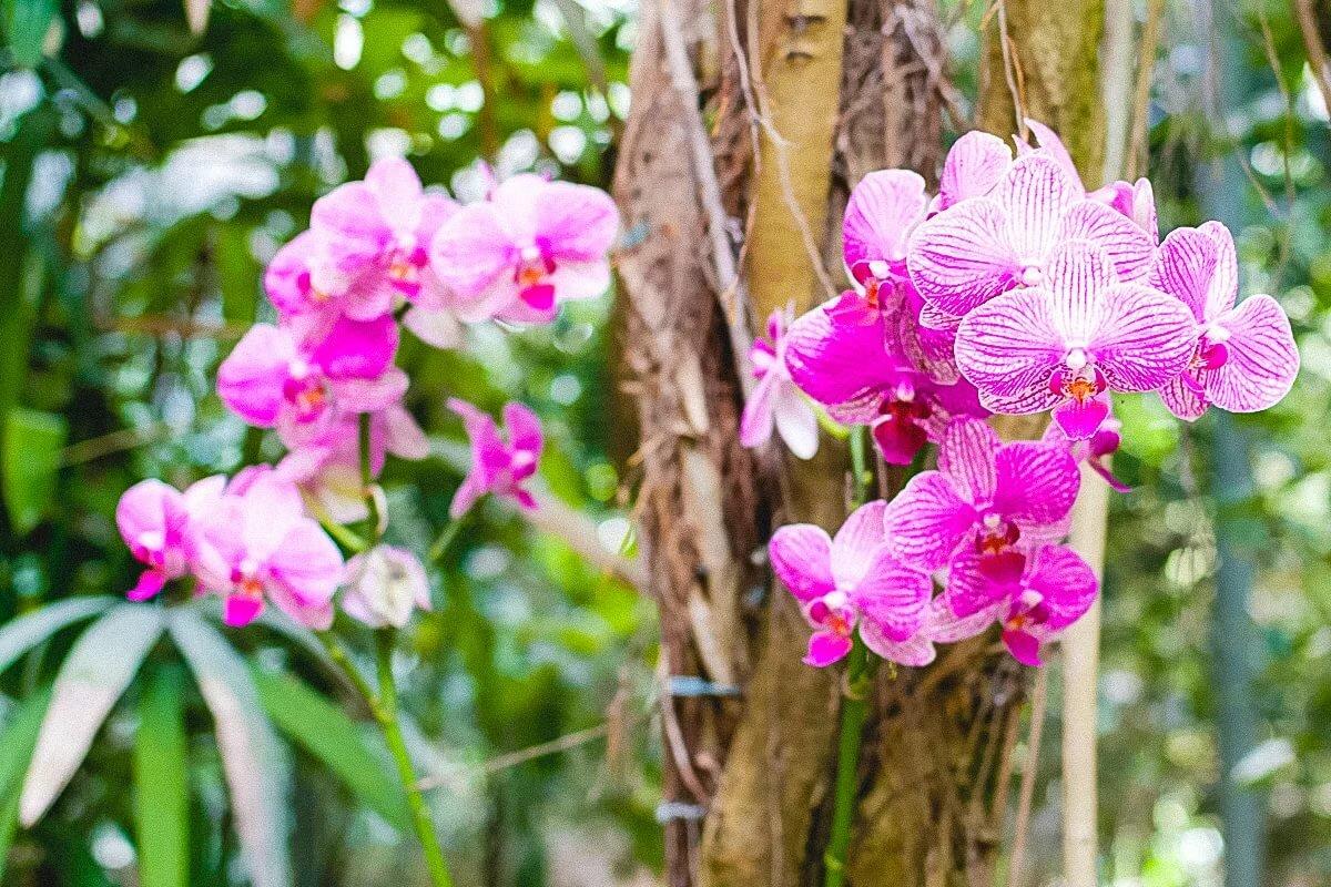 вас есть фото орхидей в тунисе это направление фотографии