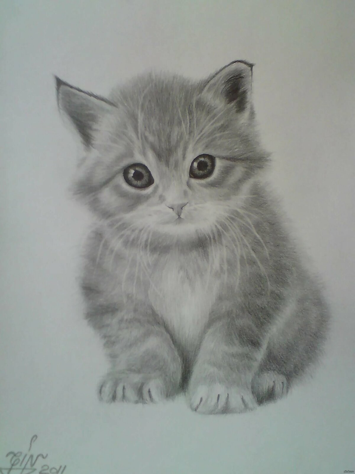 котята картинки рисовать карандашом край ямка разделяется
