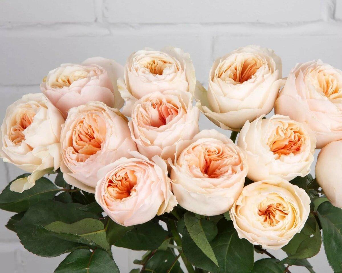 доминиканафотограф картинка пионообразные розы волейбольную форму