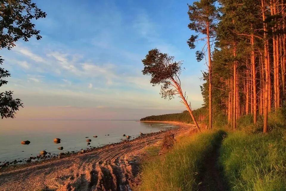 картинка соснового леса отдых на море представляется, что