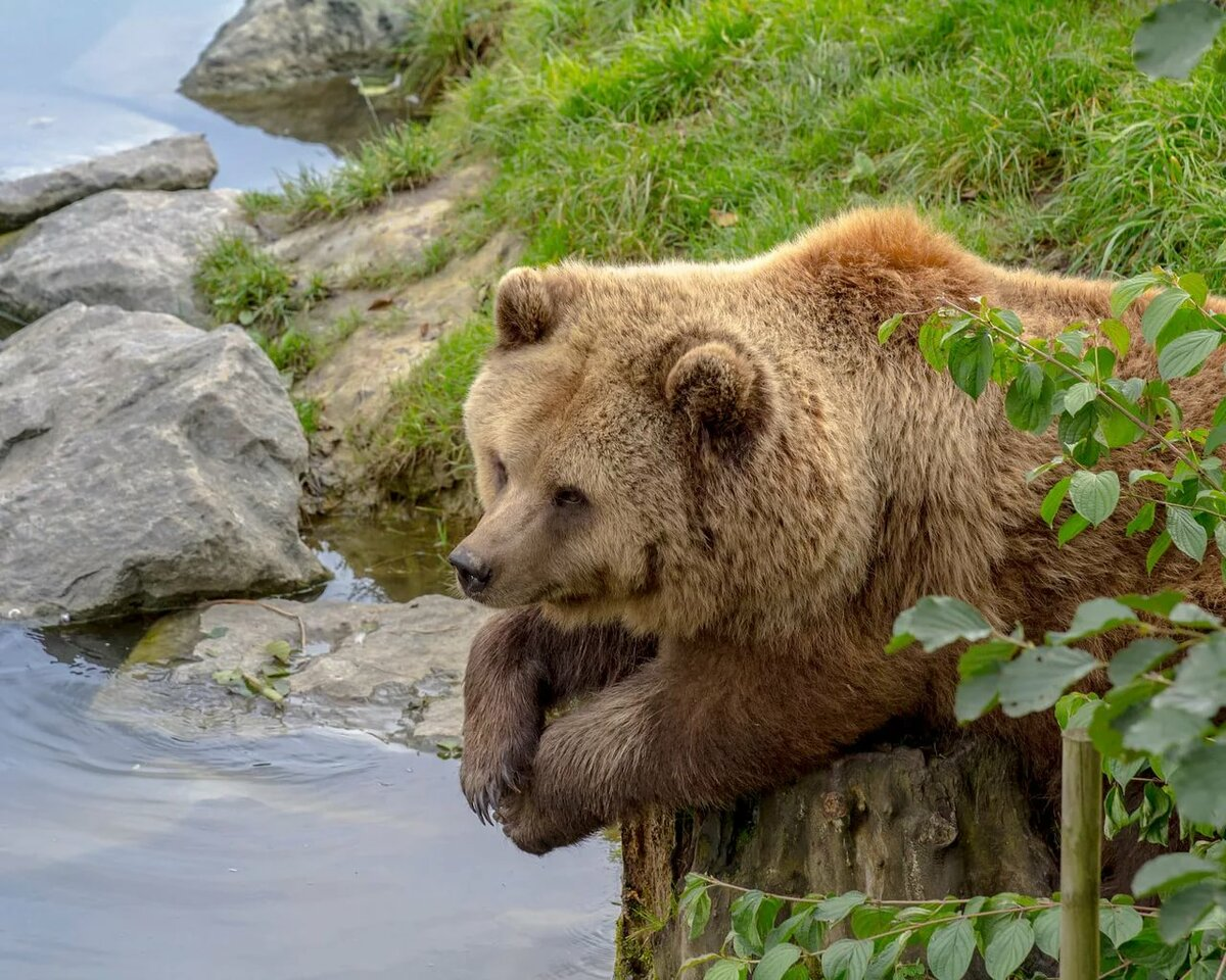 Картинки медведей на природе
