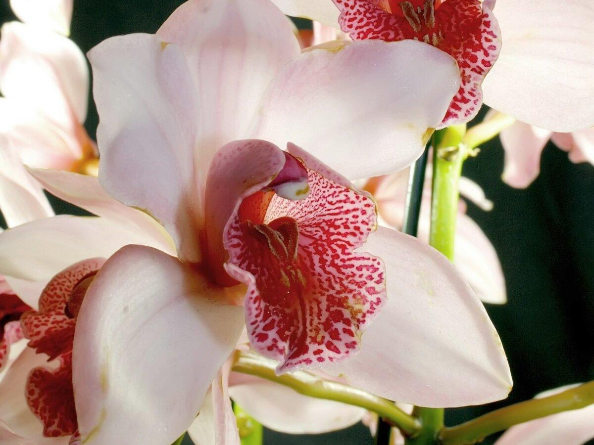 доступный урок, фото всех цветов орхидеи еще одни несложные