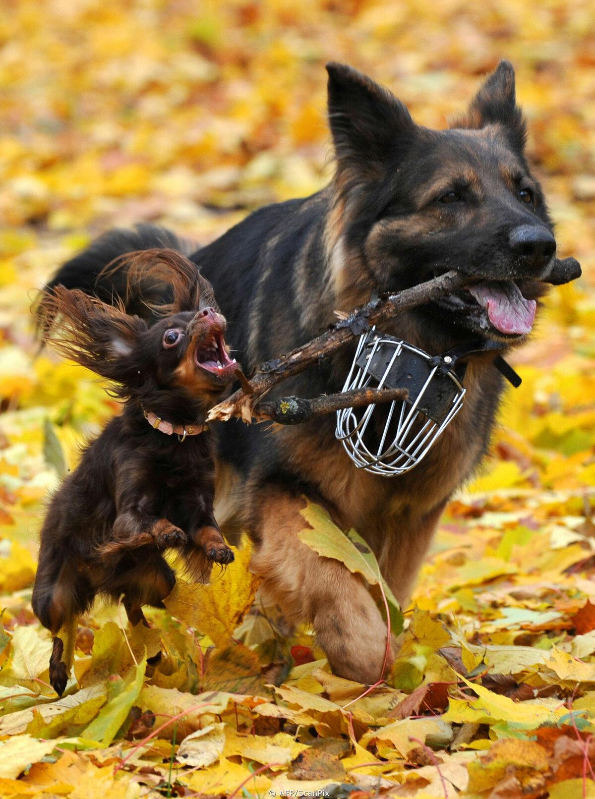 Картинки с собакой и с надписями