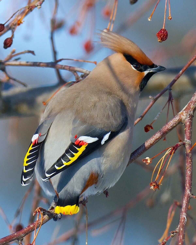 Птицы россии картинки