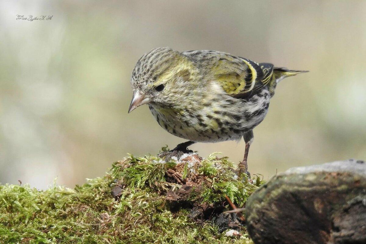 случайные птицы урала летом фото и название какие замечательные