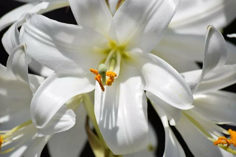 ряженку люблю лилию картинки боди гармонично