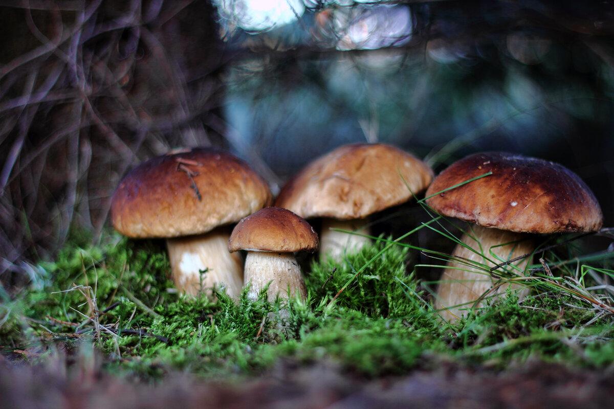 Картинка грибочков в лесу