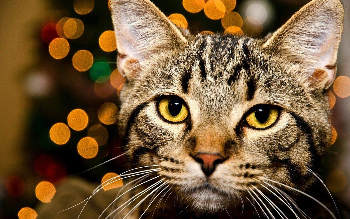 Картинки шикарные кошки