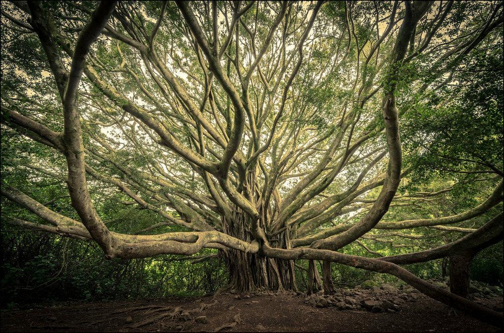 Сказочные деревья фото