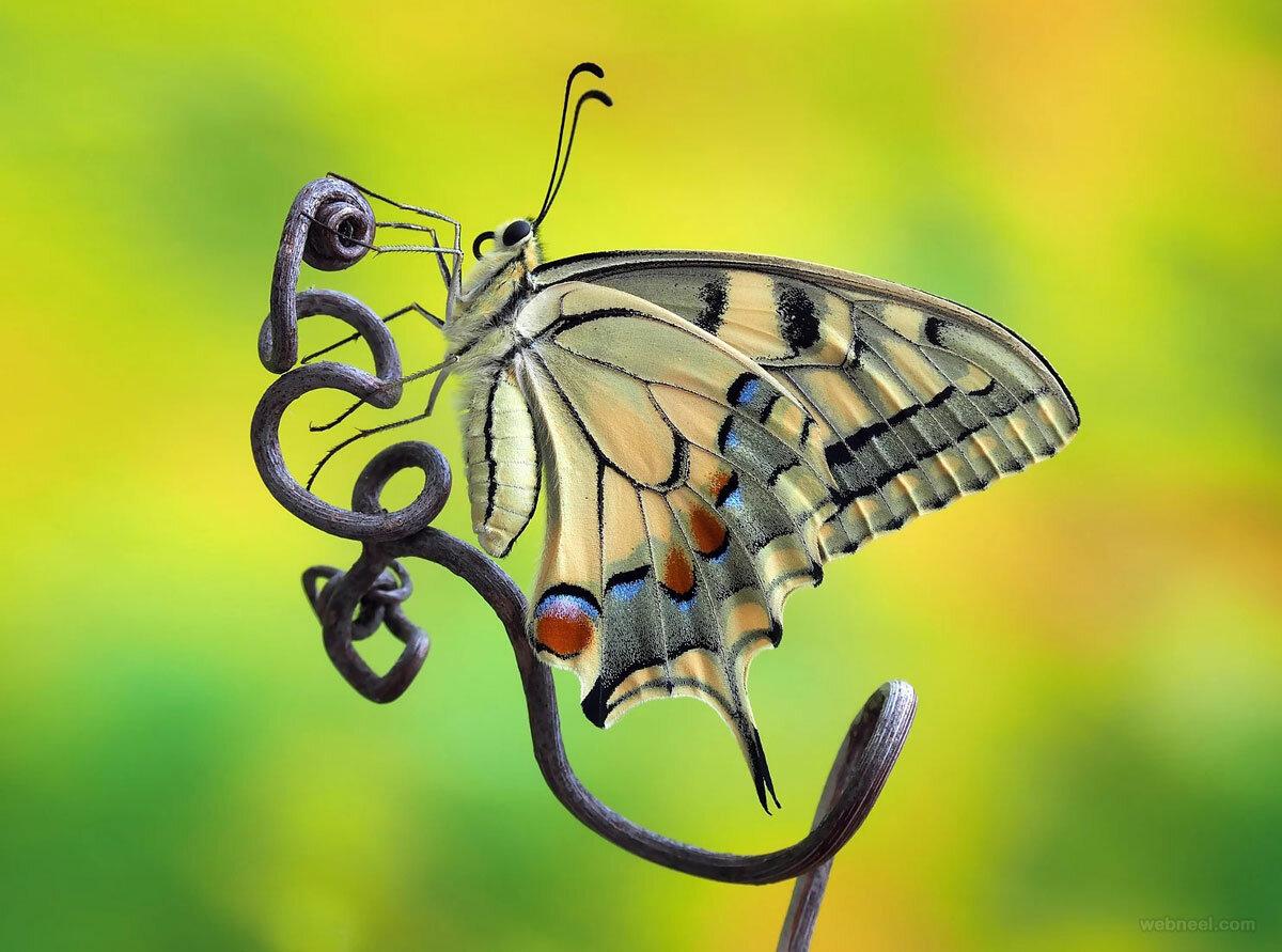 Картинки бабочки прикольные, днем рождения открытка