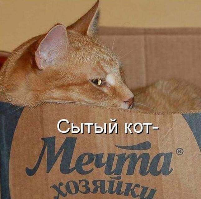Тему, картинки котов с надписями прикольными