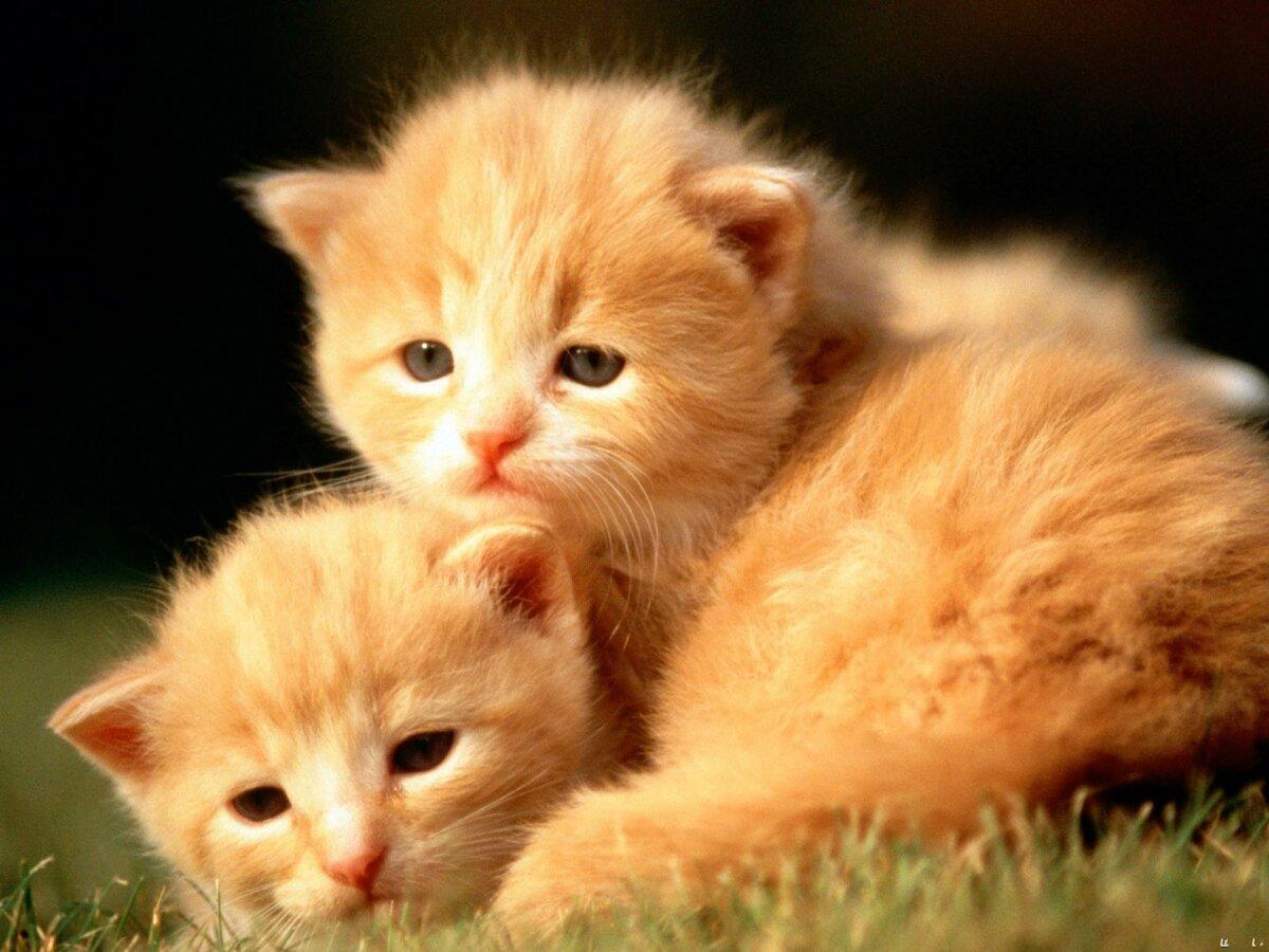 Спасибо доброе, картинки котята смешные милые