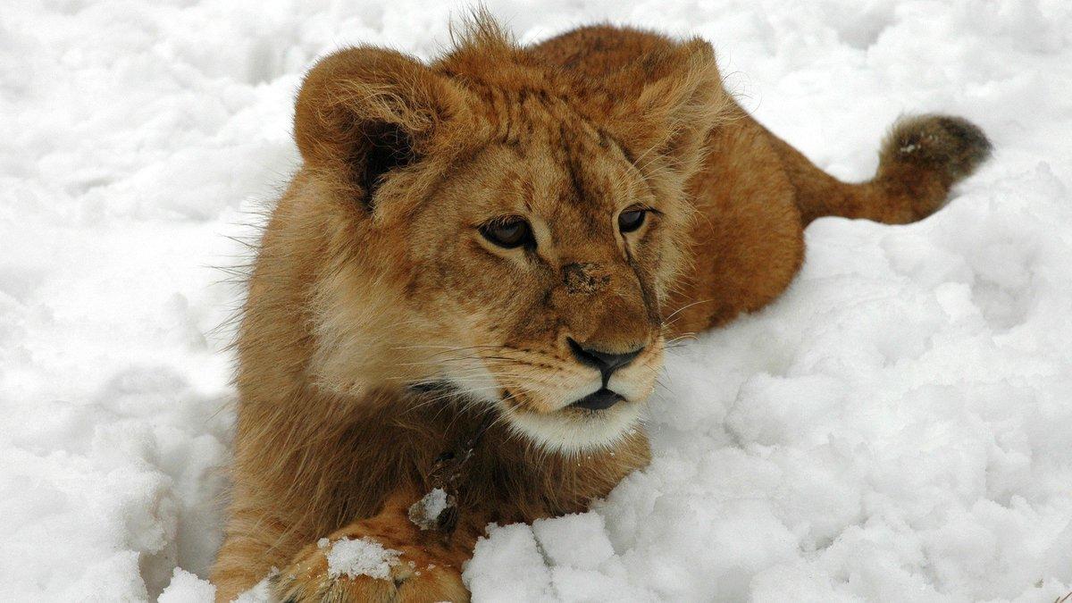 развлечения красивые картинки животных в снегу этой, крайней заметке