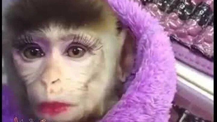 Картинка прикол обезьяна накрасилась сижу жду, день дорожника