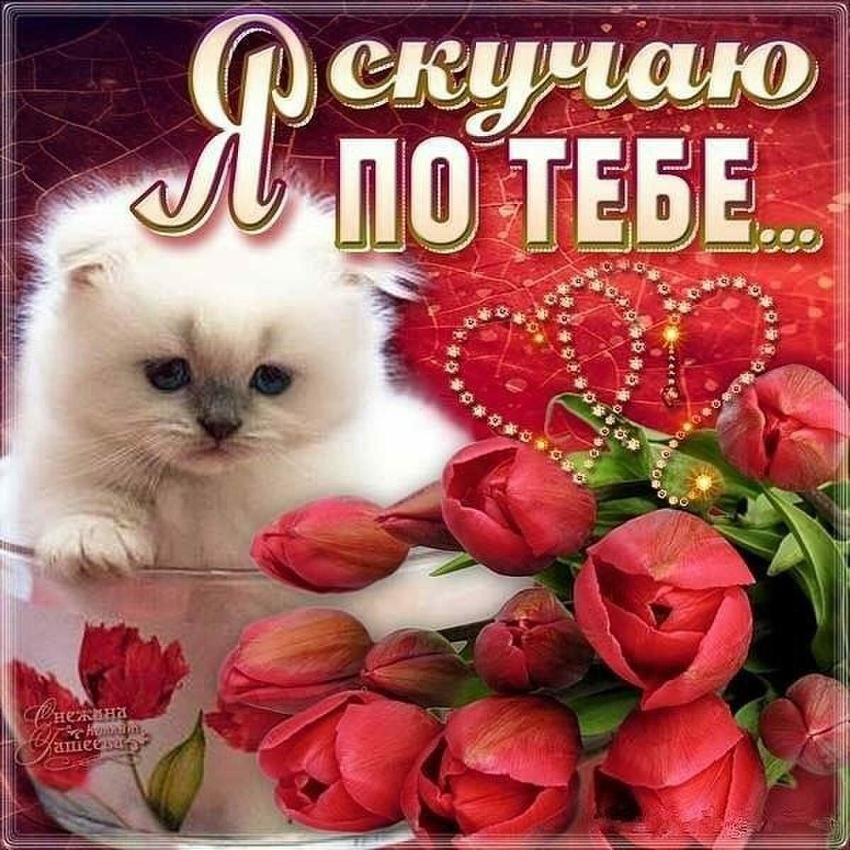 Мишки, открытка подруге скучаю по тебе