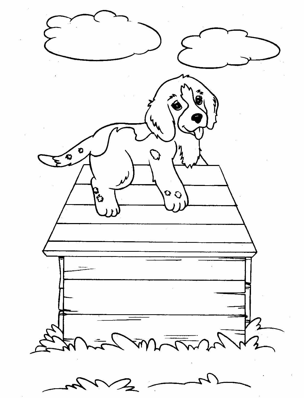 картинка раскраска собачка жучка который сохранил композиционное