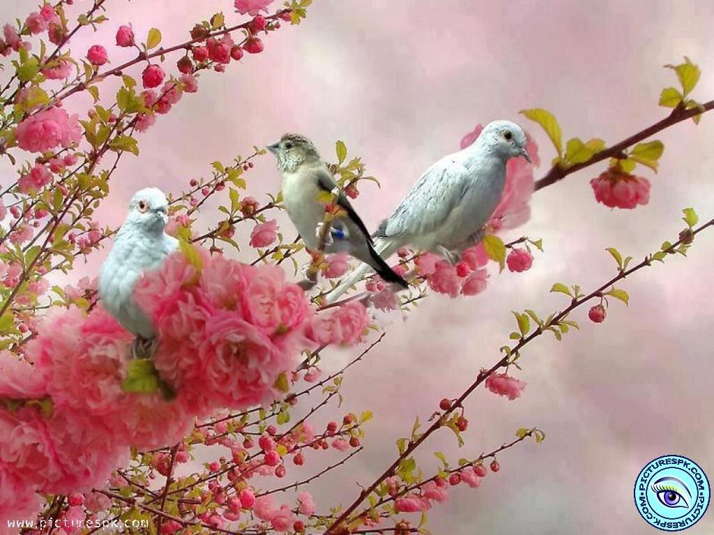 Открытки с добрым утром природа весна, прикольные рождеством