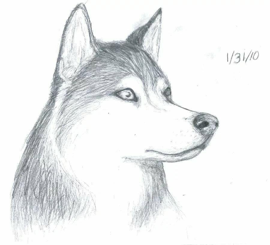 такую сумочку рисунки карандашом не сложные но красивые собаки россии настоящее