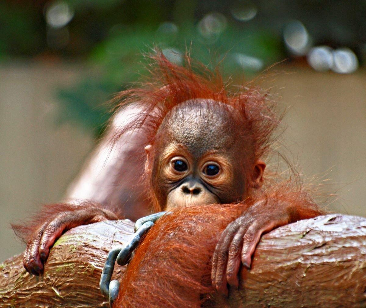 Прикольные обезьянки картинки, картинки текстом