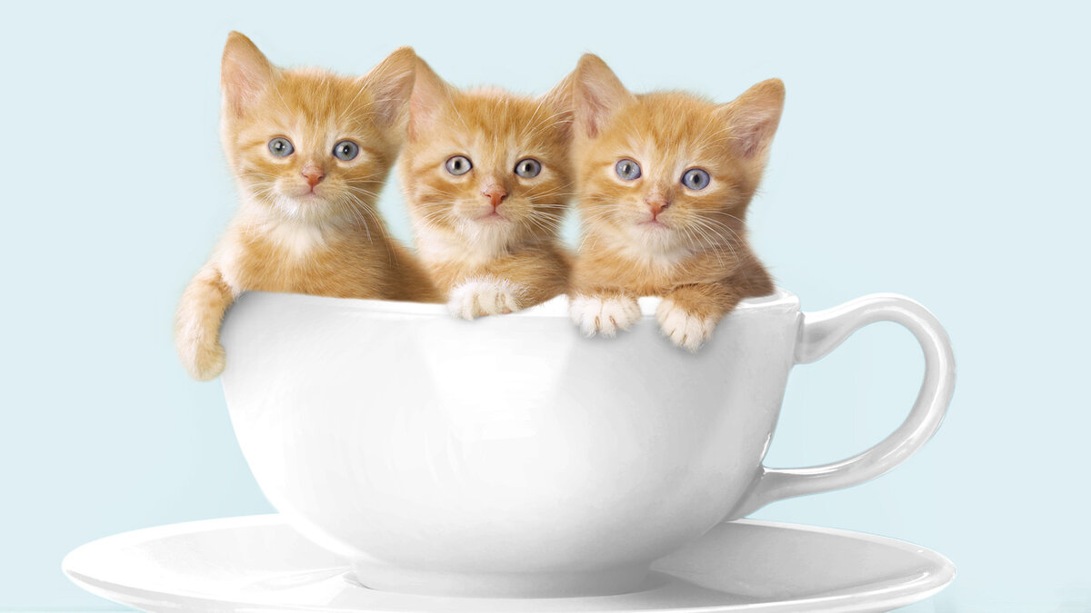 Картинки с кошками для хорошего настроения, картинки марта бабушке