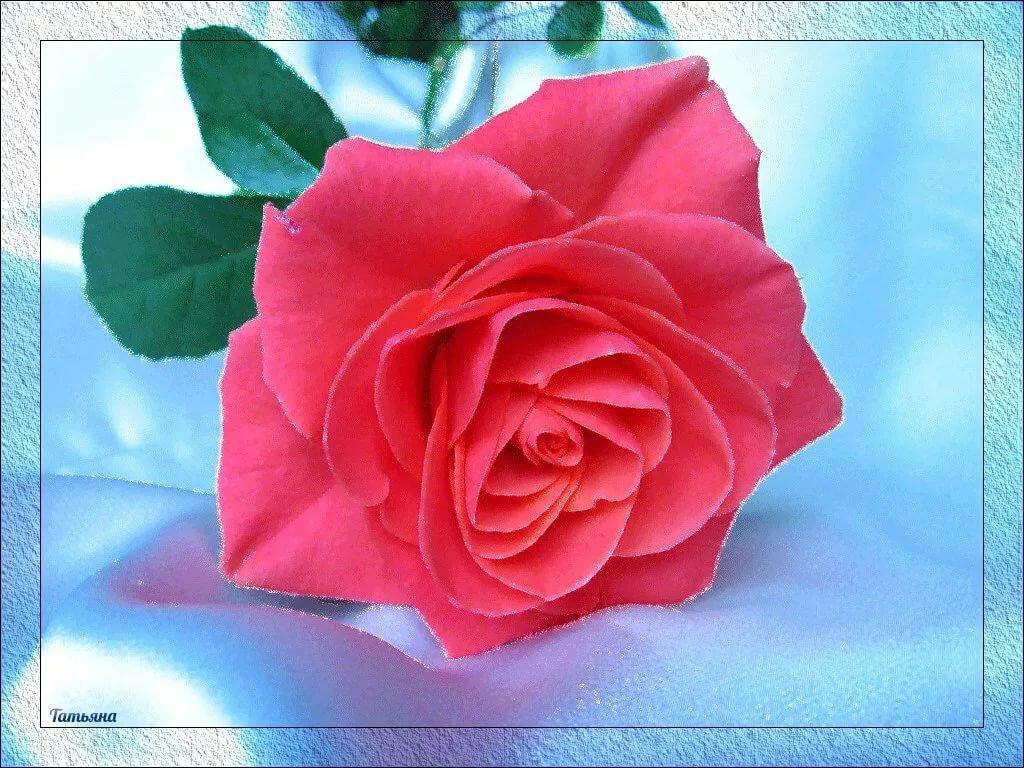 Тебе красотка, открытки спасибо взаимно красивые мерцающие