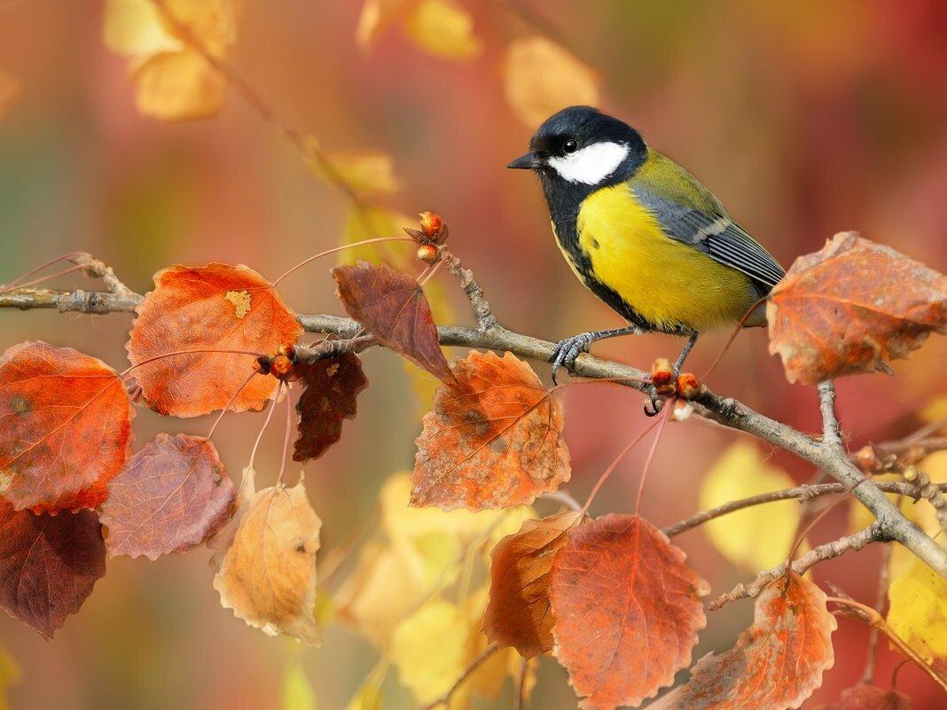 Картинки осенью птицы