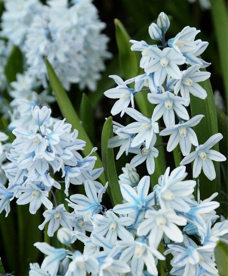 картинки пушкиния цветок удобный