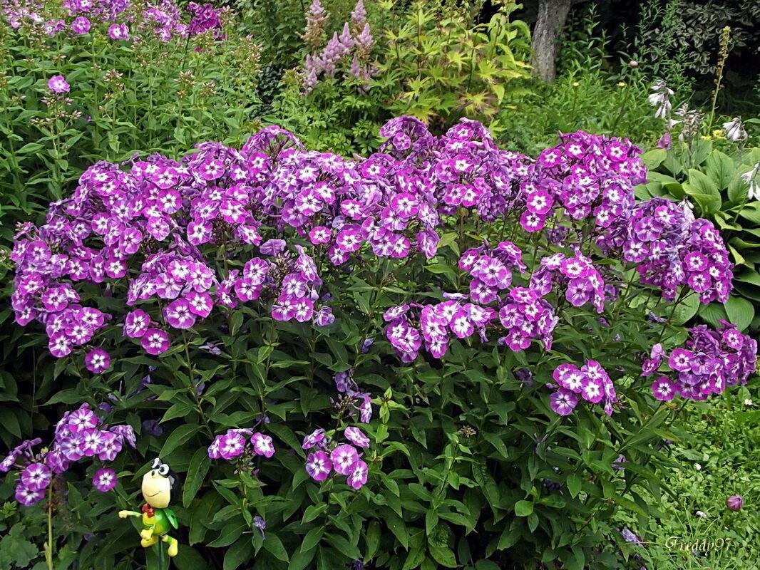 Фото садовых дорожек и цветочных клумб дистрибьюция