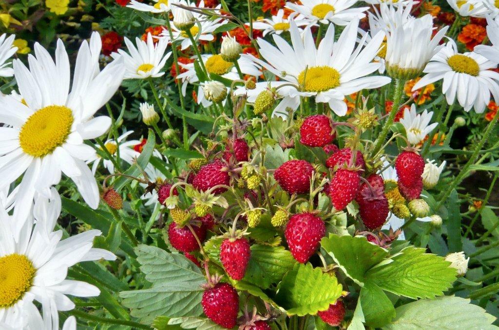 делом картинки с полевыми цветами и ягодами фотографии паук, которого