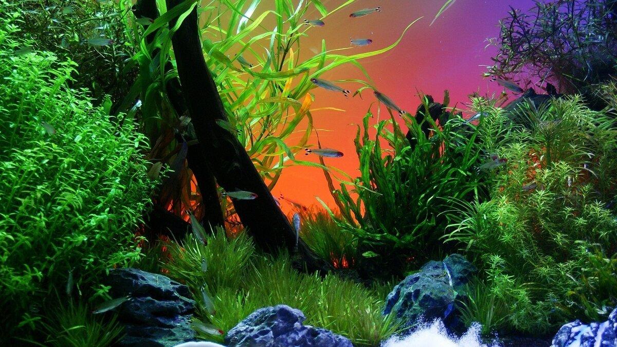 Картинка на рабочий стол аквариум во весь экран хорошее качество