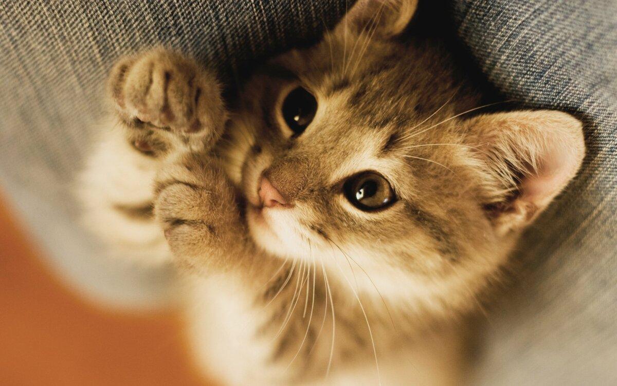 Картинки милые котики