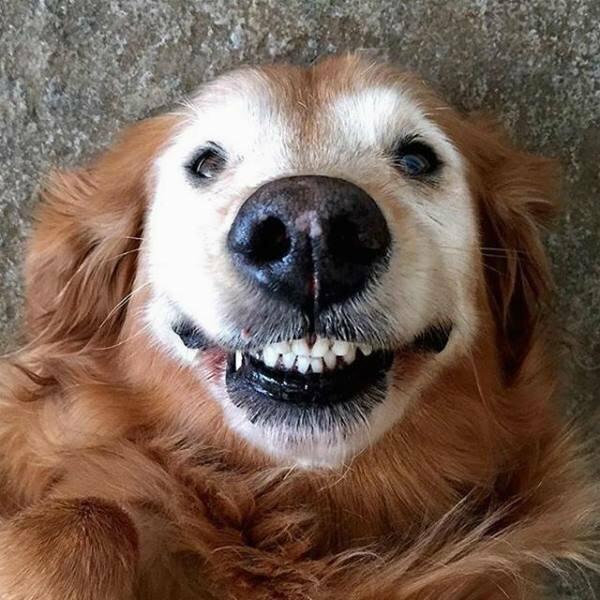 предлагаем улыбающаяся собака фото вариации смысловых значений