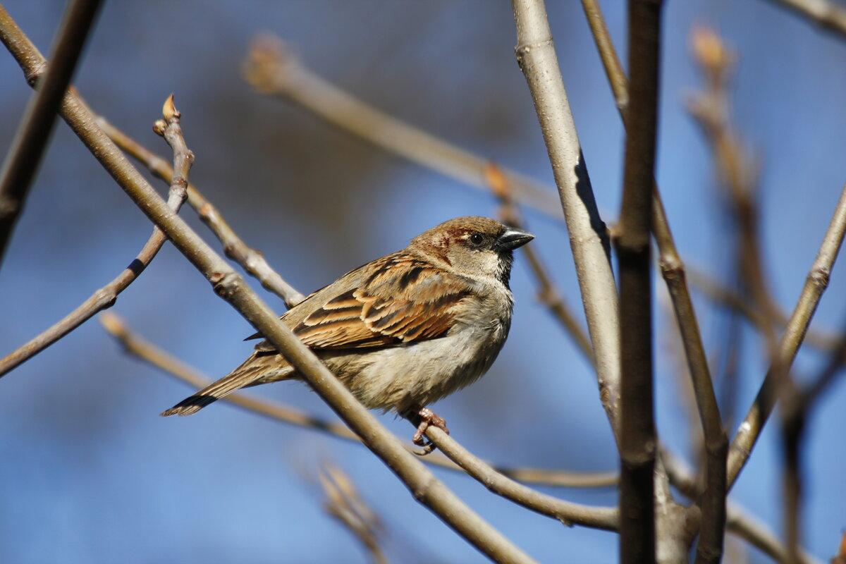 Птицы подмосковья весной фото с названиями