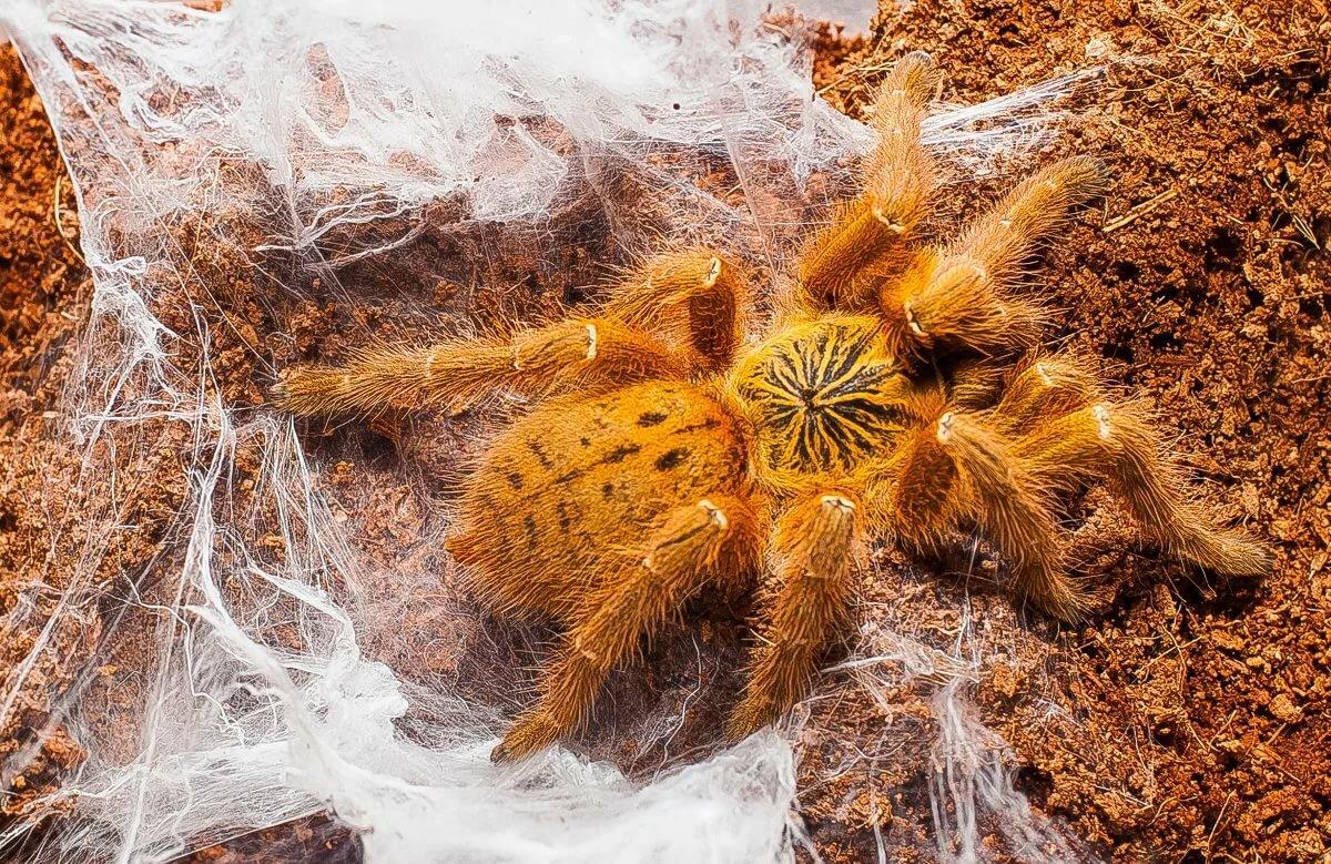собранием млечный пауки картинки университетская жизнь