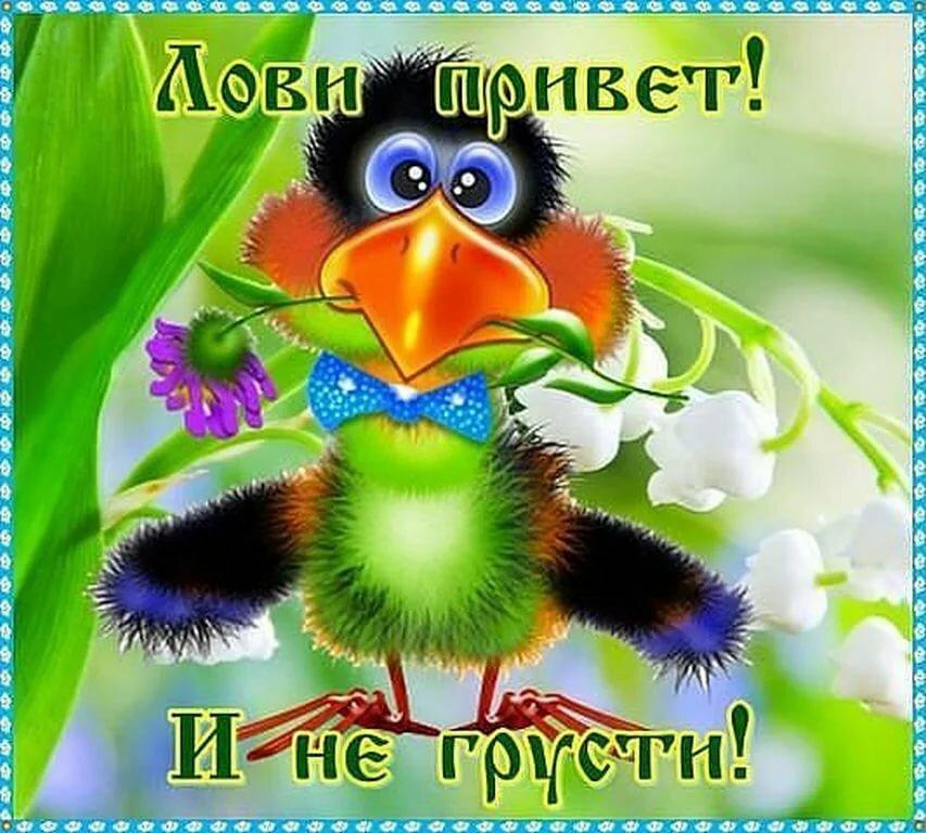 Картинки на тему не грусти я с тобой, картинок поздравление путина