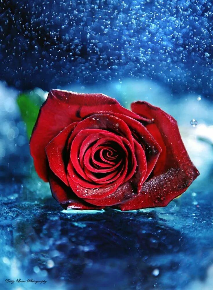 Надпись картинки, открытки благодарю розы