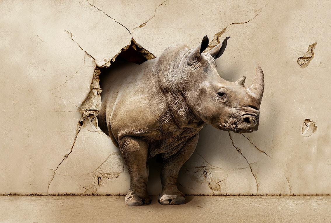Надписями, прикольный носорог картинка