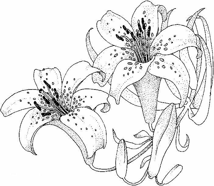 Цветы в волосах картинки карандашом сруба