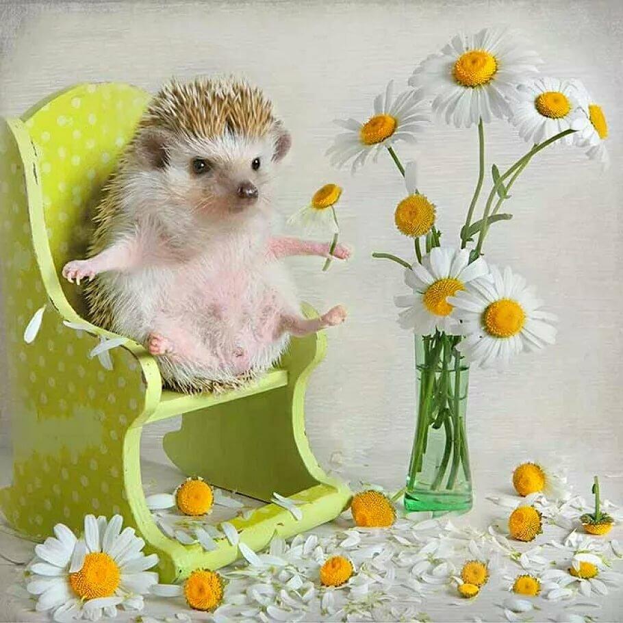 Доброе утро картинки красивые животные с надписями