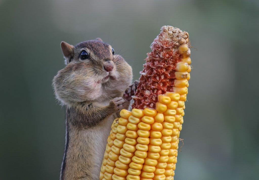 Смешные картинки со словами животные