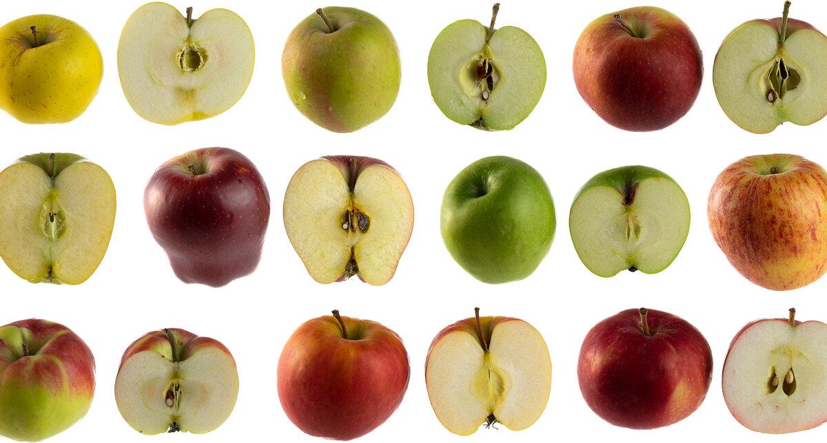 пастер, краткая яблоки картинки с названием отметить, что