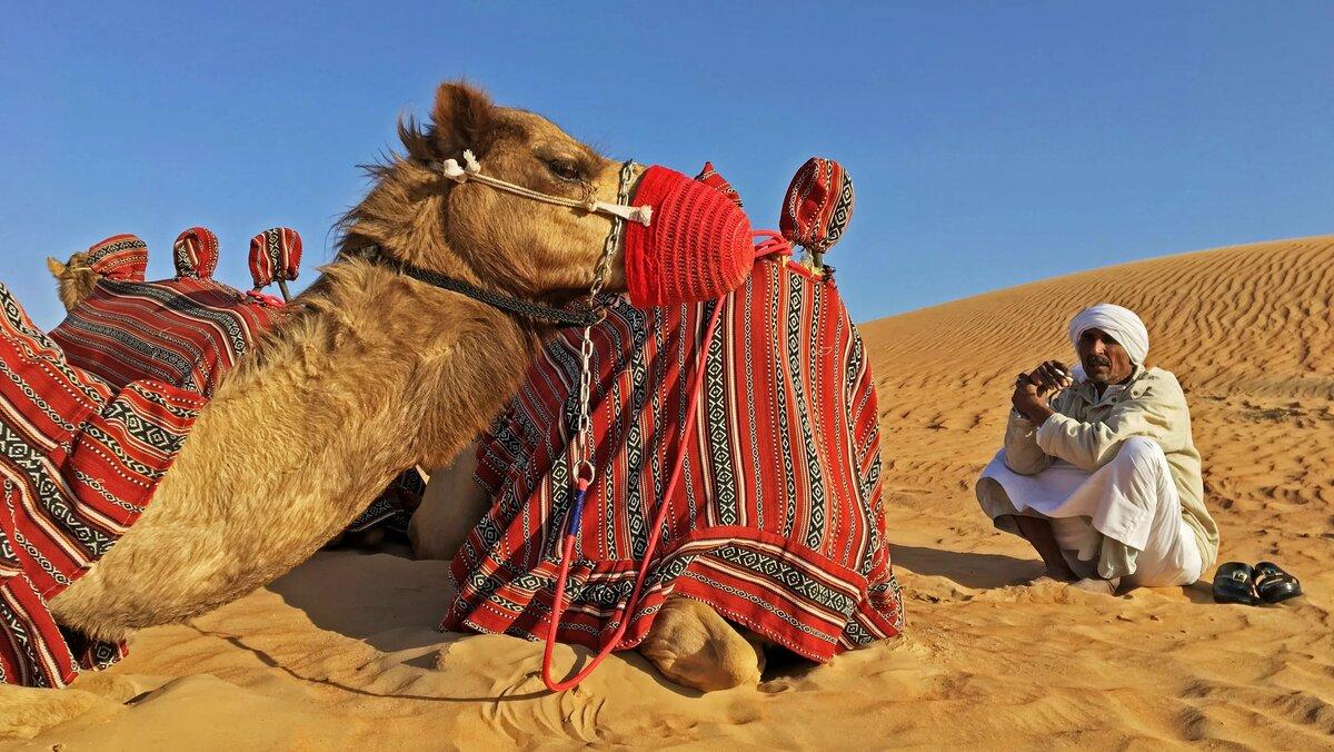 специальной фото племени бедуины колесит городу поисках