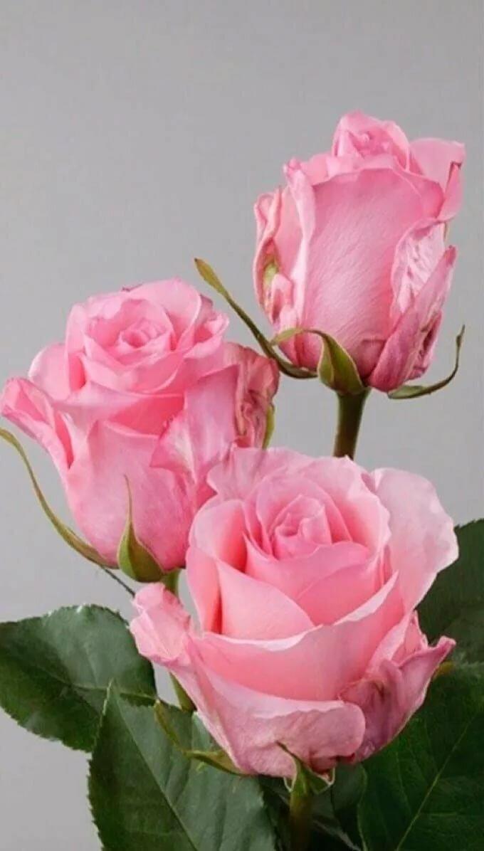 Have faith and keep believing in God.... Words of Encouragement By Elaine Цветы, Красивые цветы, Розовые розы