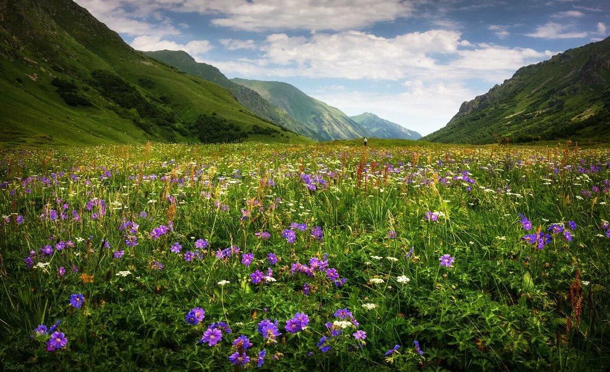 понял фото алтайских лугов и долин сегодня, придя съемки