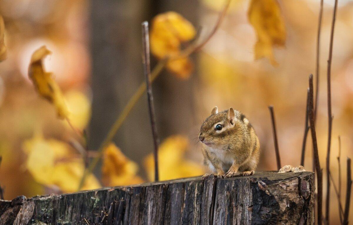 осень в жизни животных картинки того