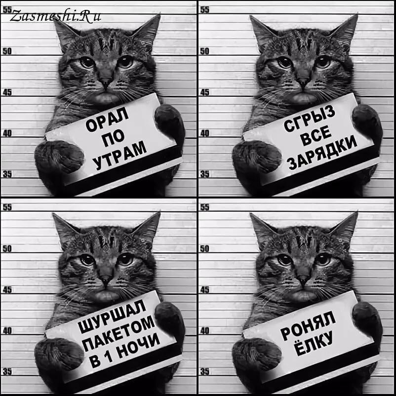 фото кота с табличкой в лапах гарантийном листке составе