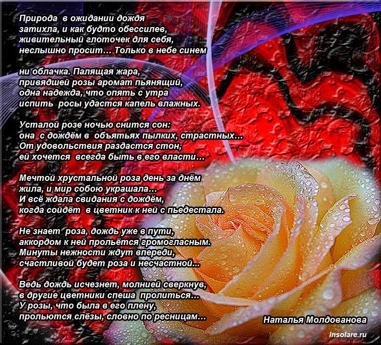 нравились стихи к каждой розе буду