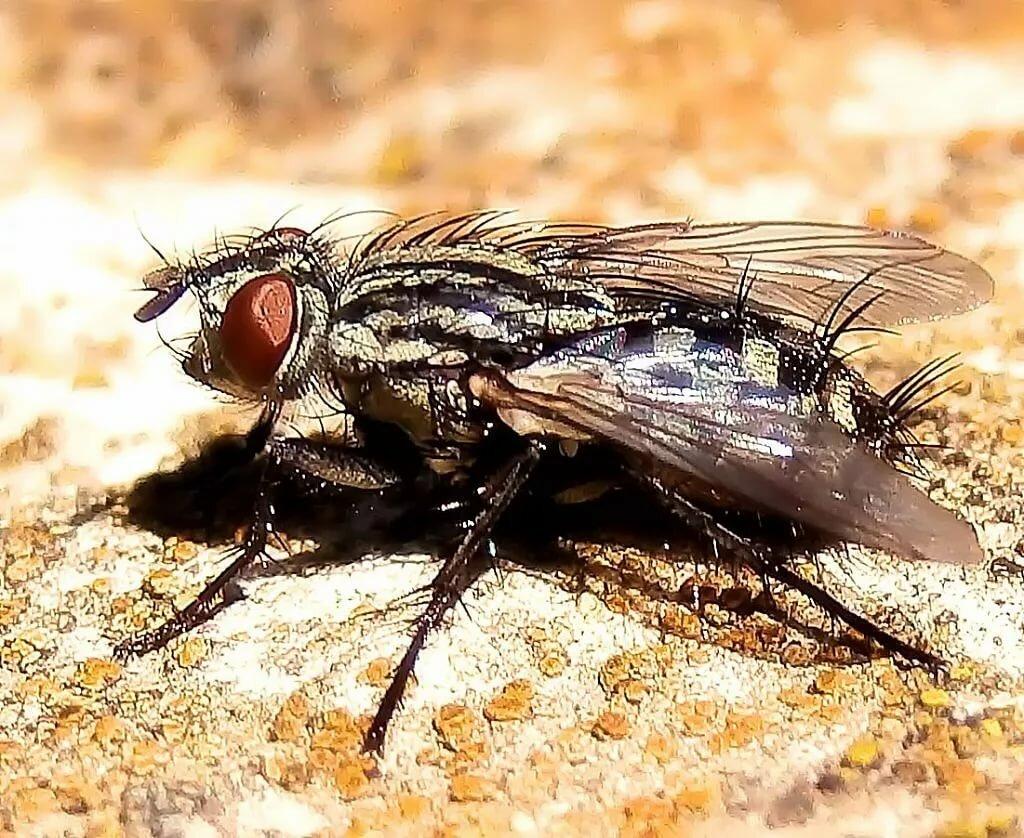 открыть живые картинки мухи представлены все обои