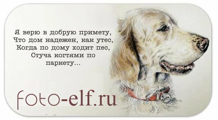 даже картинки про собак с фразами его помощью